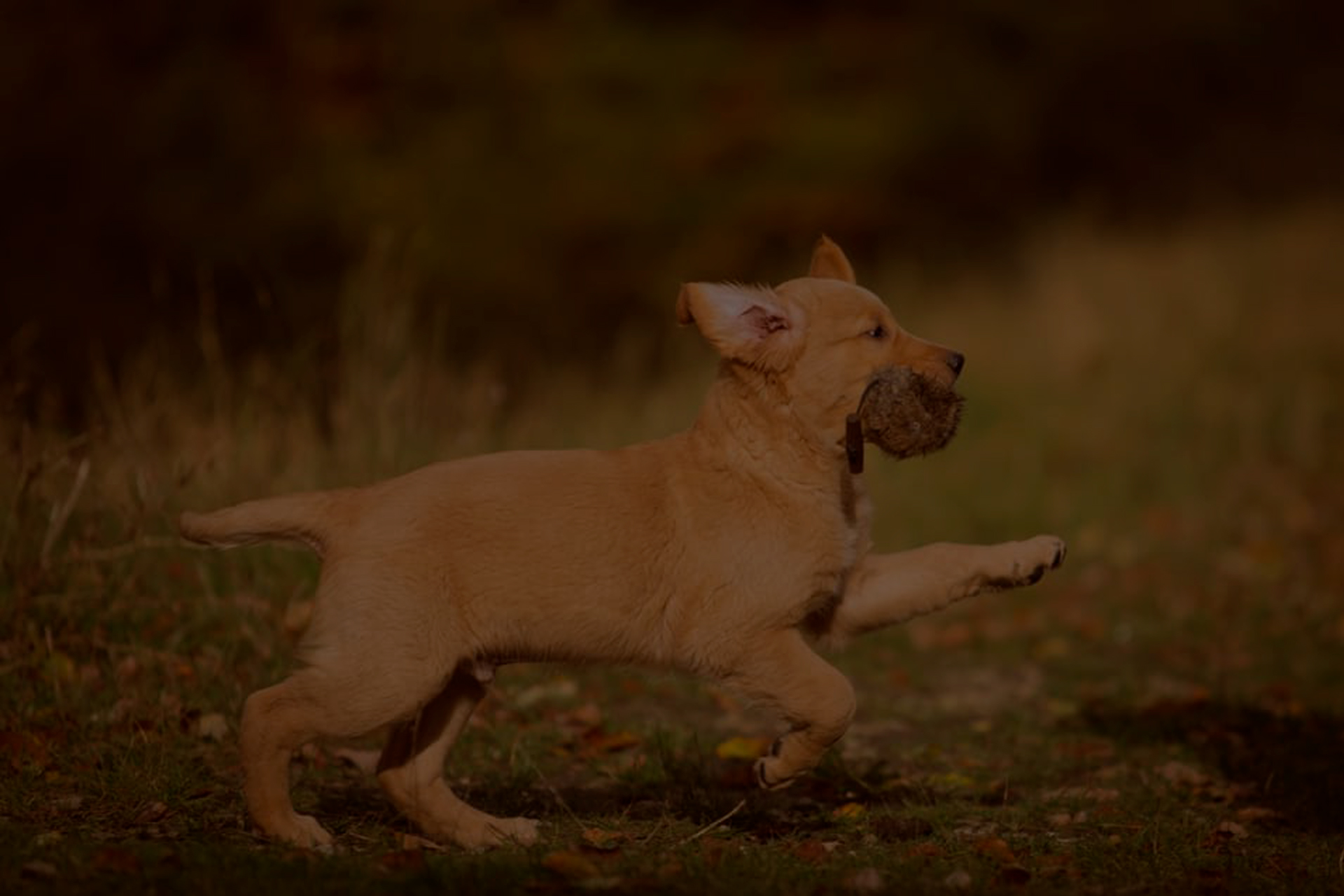 Aktuell: Jagdliches Training